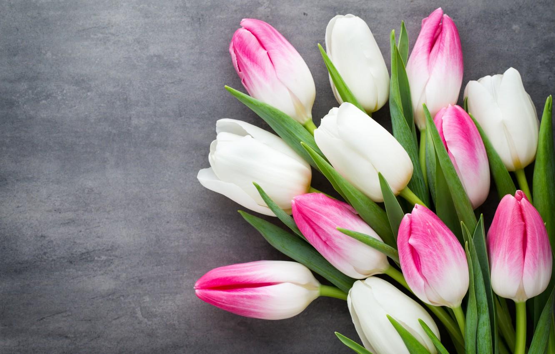 Фото обои цветы, букет, тюльпаны, розовые, white, белые, fresh, pink, flowers, beautiful, tulips, spring