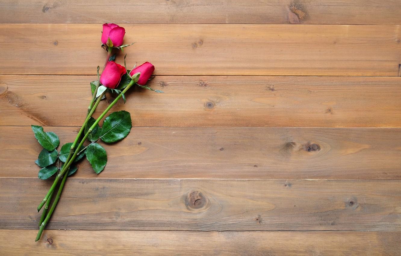 Фото обои цветы, фон, розы, бутоны