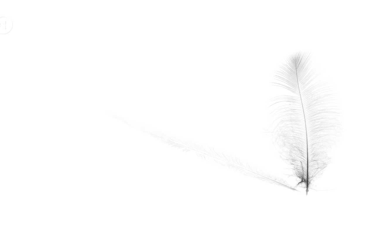 Обои перо, лист, узор, Цвет. Абстракции foto 7