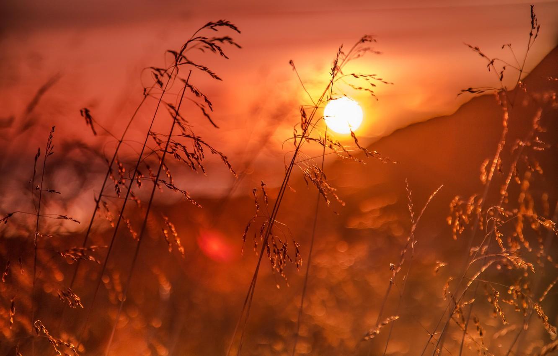 Фото обои трава, восход, рассвет, Норвегия, боке