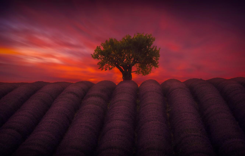 Фото обои поле, небо, дерево, вечер
