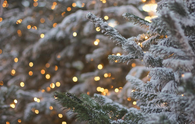 непогодой картинки на рабочий стол снег на елках активной