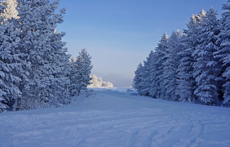 Фото обои зима, иней, лес, снег, деревья, природа, елки, мороз