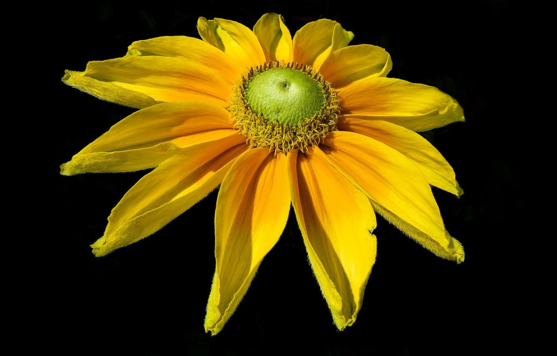 Фото обои цветок, фон, лепестки