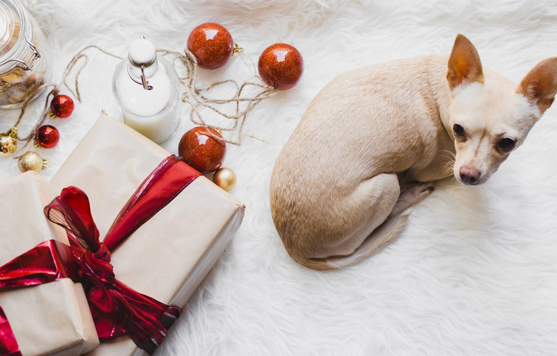 Фото обои шары, игрушки, новый год, щенок, подорок