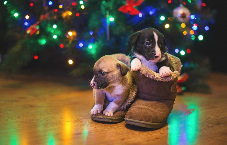 Фото обои собаки, огни, щенки, парочка, уги