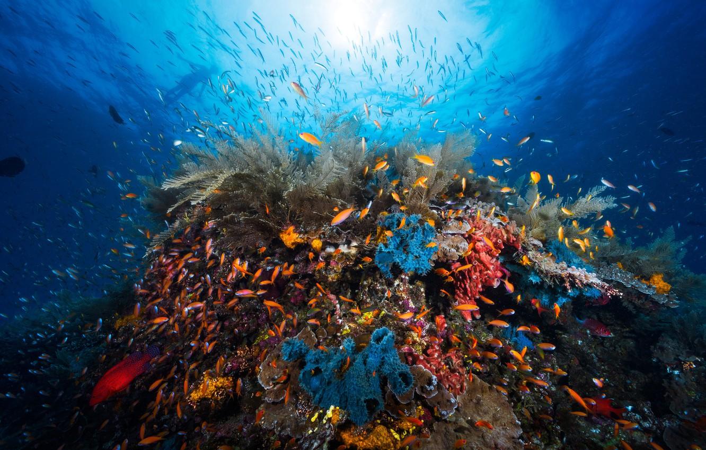 этом фото океана под водой подтащили артиллерию