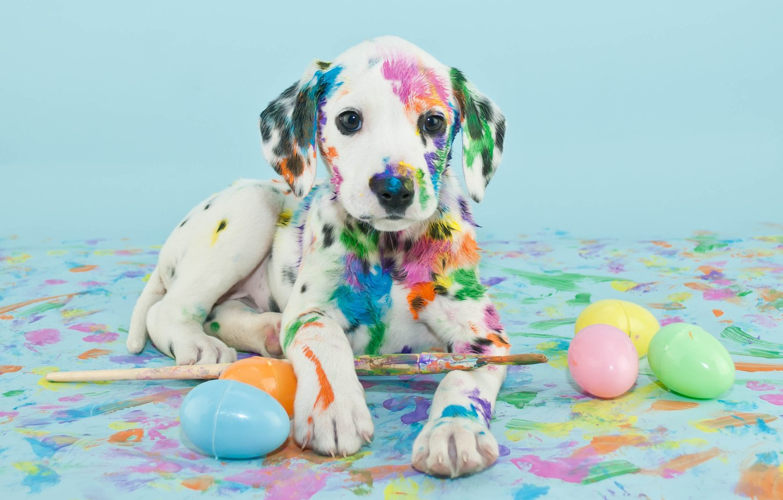 Обои краски, щенок, яйца, кисти. Собаки foto 11