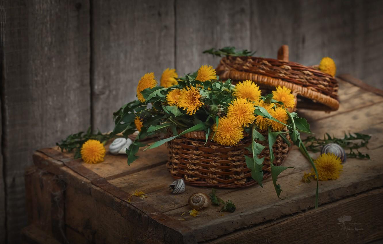 Фото обои цветы, корзина, букет, натюрморт, одуванчики
