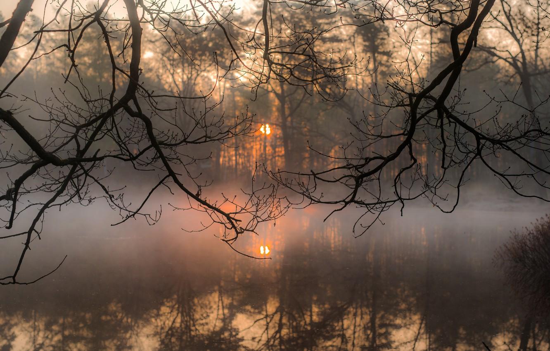 Фото обои солнце, ветки, туман, утро, silence, ☀