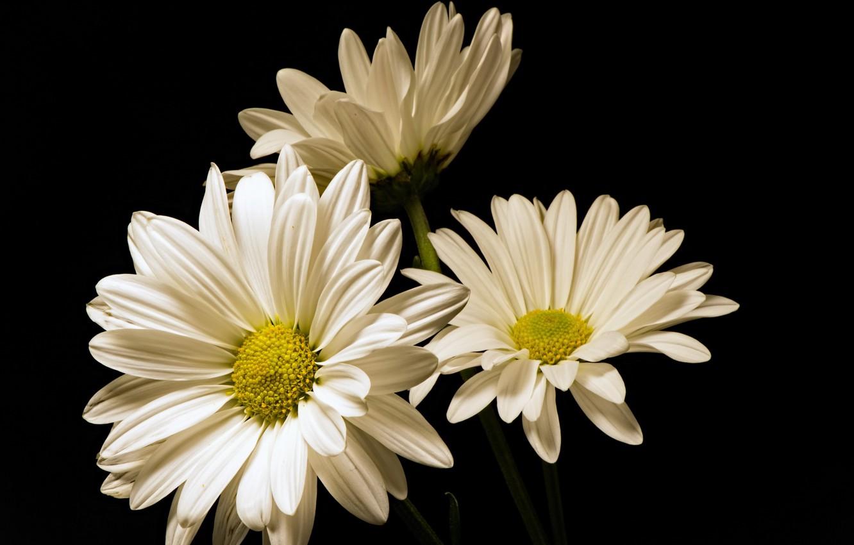Фото обои цветы, природа, фон