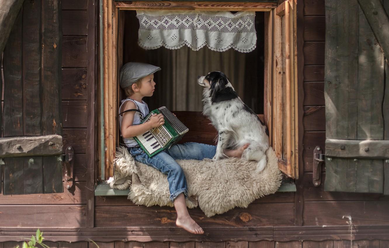 Фото обои собака, мальчик, окно, шкура, кепка, друзья, аккордеон