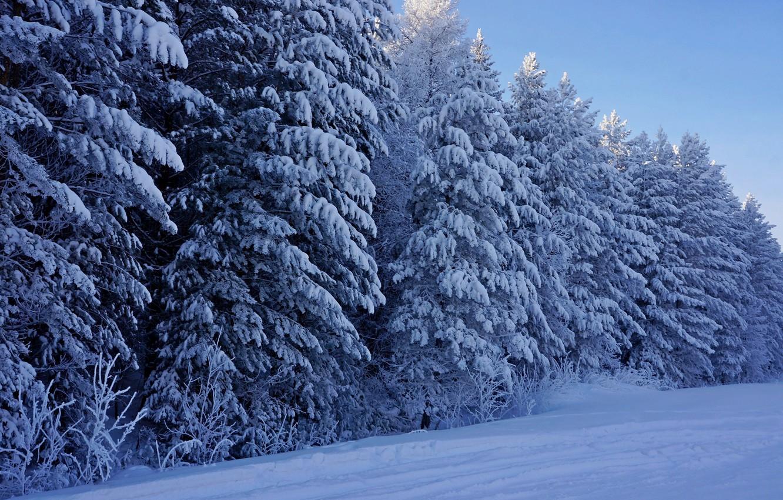 Фото обои зима, лес, снег, деревья, природа, елки, мороз