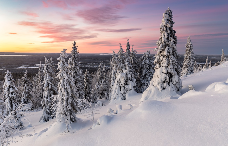 Фото обои зима, деревья, закат, природа