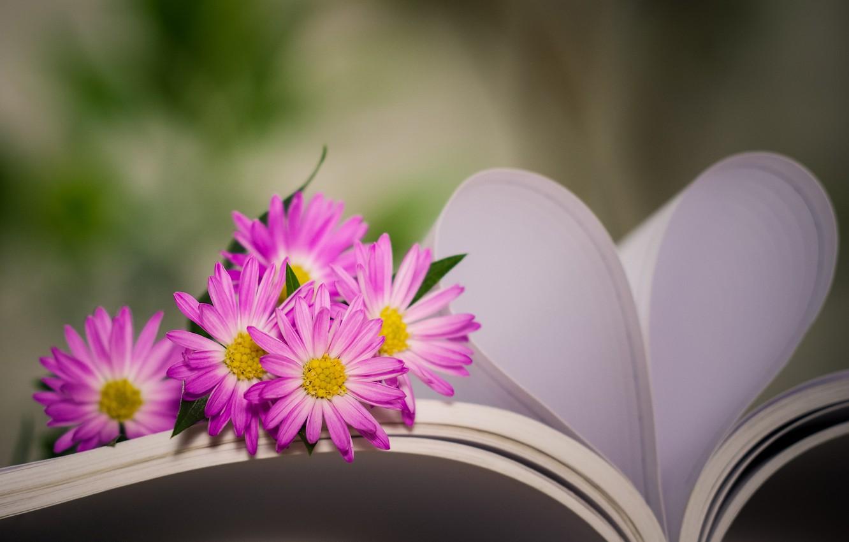 Фото обои цветы, сердце, книга, боке