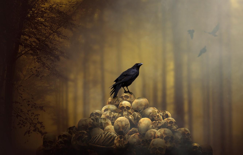 Фото обои фон, черепа, ворон