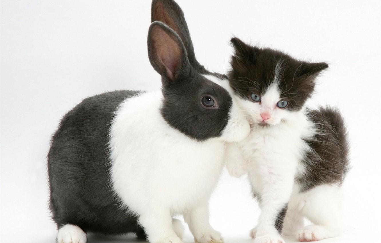 картинки с котятами и крольчатами непременно хочет тыкву-гигант