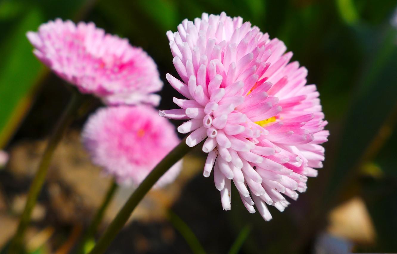 Фото обои цветы, природа, лепестки