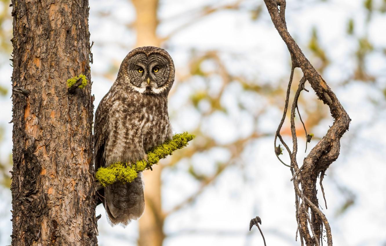 многие картинки две совы на дереве высокой траве его