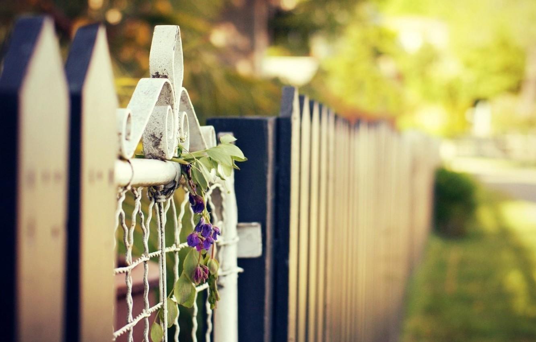 Фото обои лето, цветы, город, улица, забор, калитка, blur, bokeh