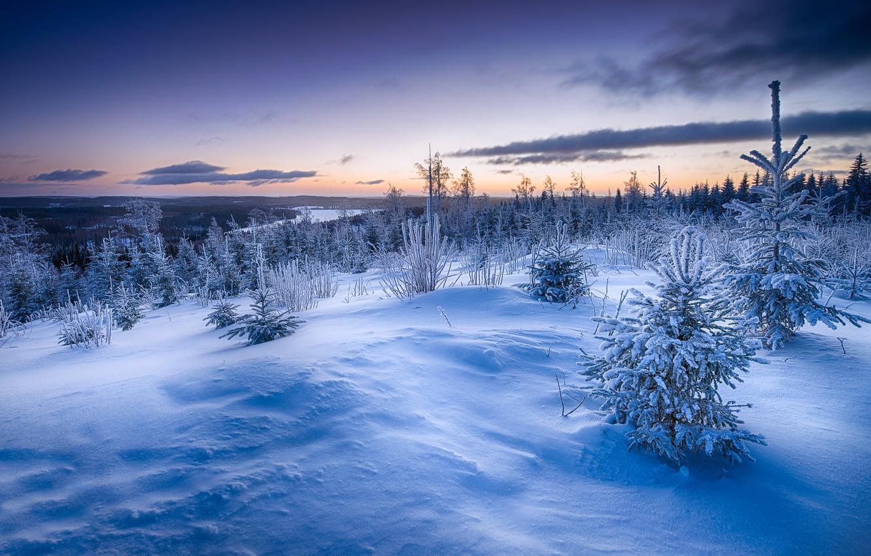 Фото обои зима, снег, закат, ёлки