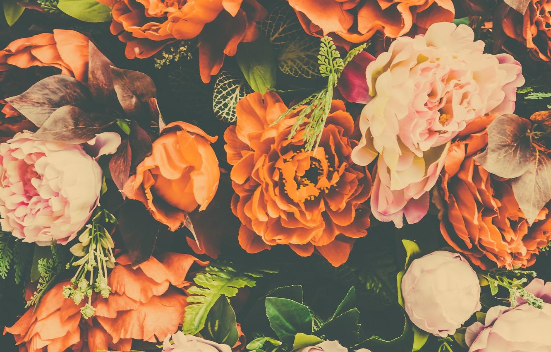 Фото обои цветы, лепестки, бутоны, пионы