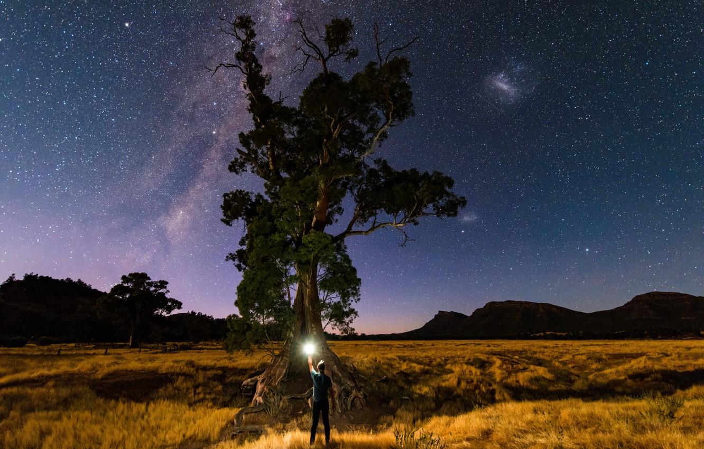 Фото обои звезды, свет, природа, дерево, человек, млечный путь