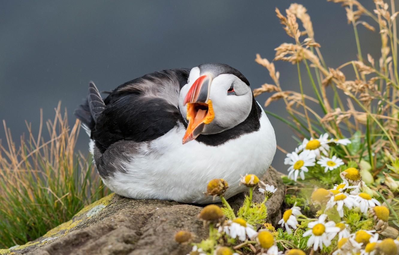 Фото обои цветы, природа, птица, окрас, тупик