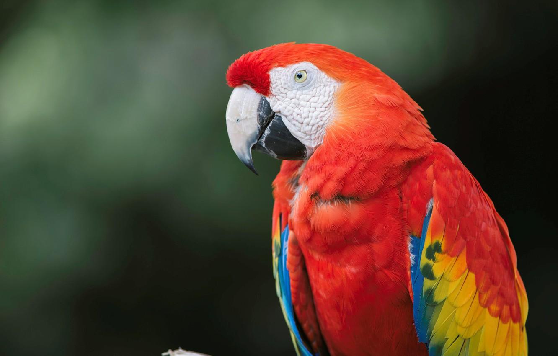 статье картинки попугай красный уже говорилось ранее