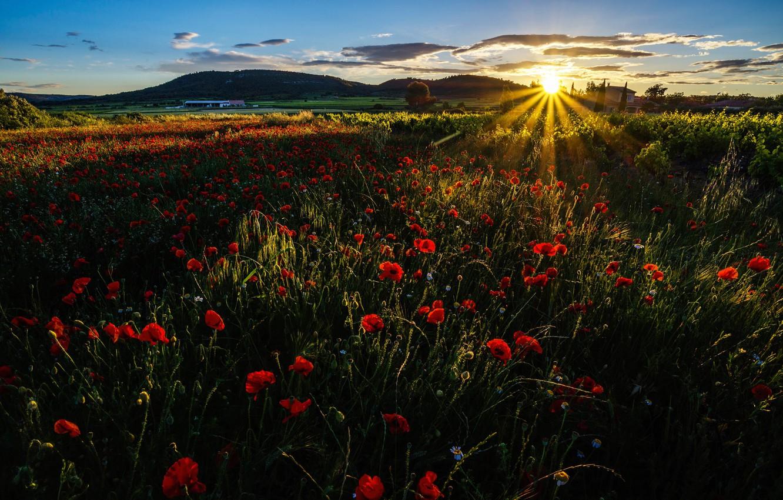 Фото обои поле, трава, лучи, закат, цветы, горы, маки, луг