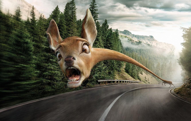 Фото обои дорога, животные, страх, опасность