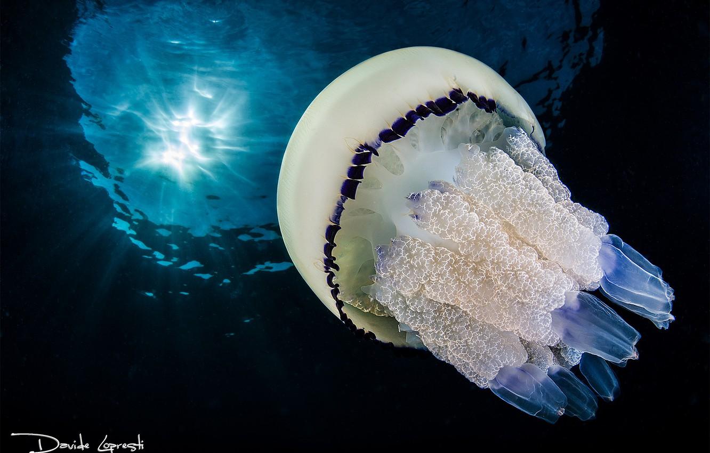 Фото обои море, океан, медузы, подводный мир