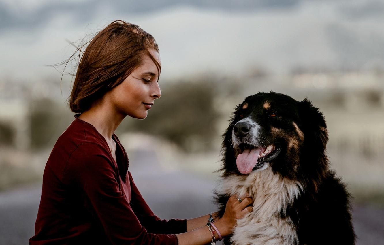 Фото обои девушка, настроение, собака