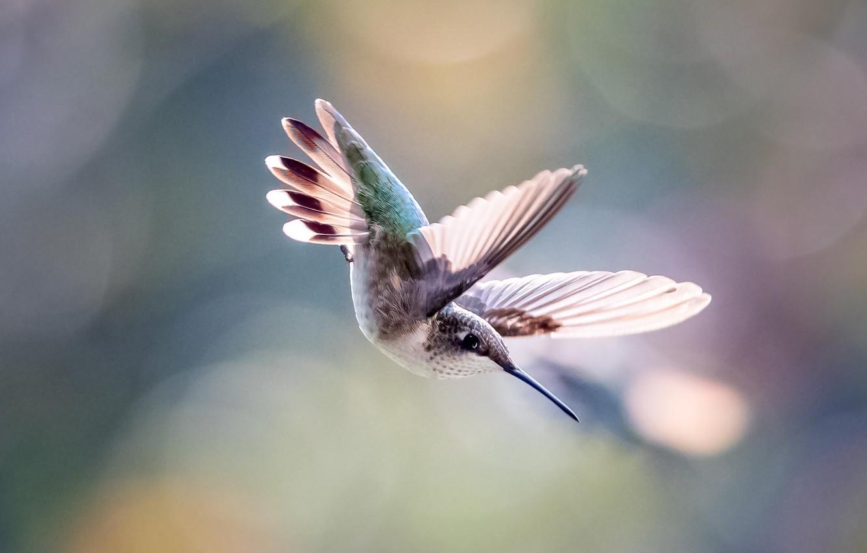 особенности взлетающая птица картинки можете ознакомиться