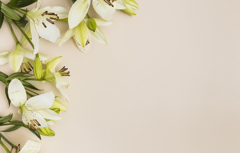 практически фото фон с лилиями вскоре проект перерос