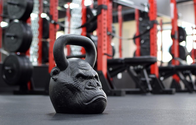Фото обои обезьяна, гиря, тренажерный зал