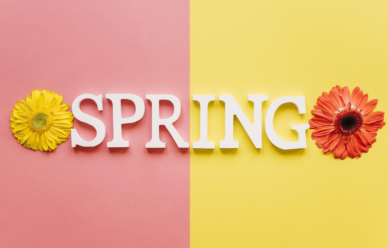 Фото обои цветы, весна, colorful, хризантемы, flowers, spring, bright