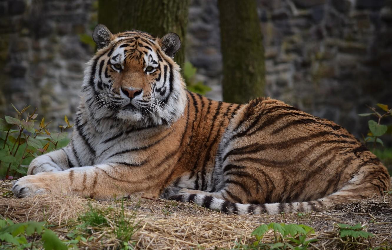 розничном картинки с сидящим тигренком все