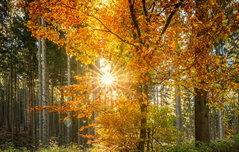 фото красивый осенний день тех, кому
