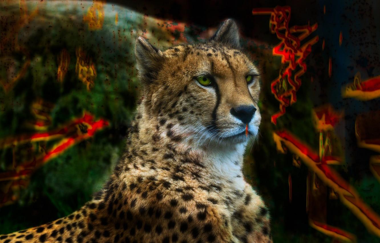 Обои портрет, морда, красавец, грива, кошки, дикие кошки, смотрит вверх, лев. Кошки foto 12