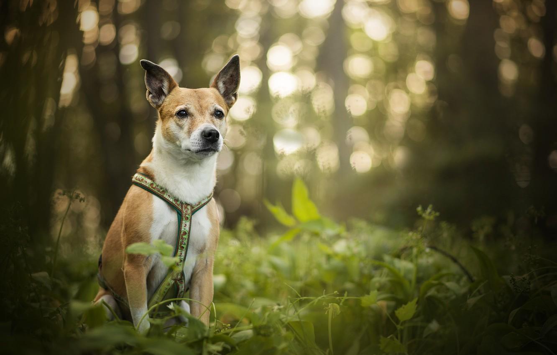 Фото обои зелень, блики, собака, боке, Luna