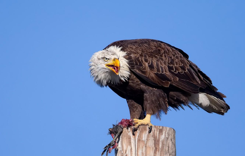 книгу картинка русского орла серьезное достижение