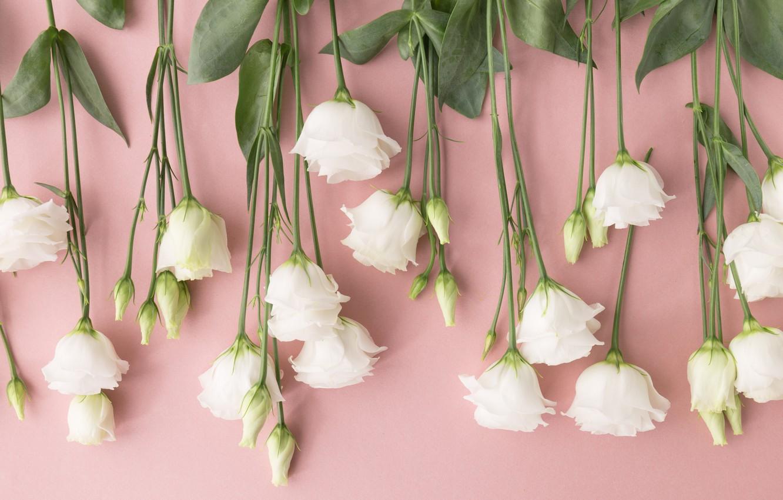 Фото обои цветы, white, белые, бутоны, flowers, эустома, eustoma