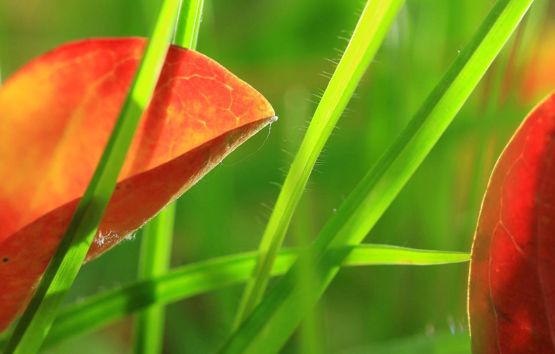 Фото обои трава, листья, природа, краски