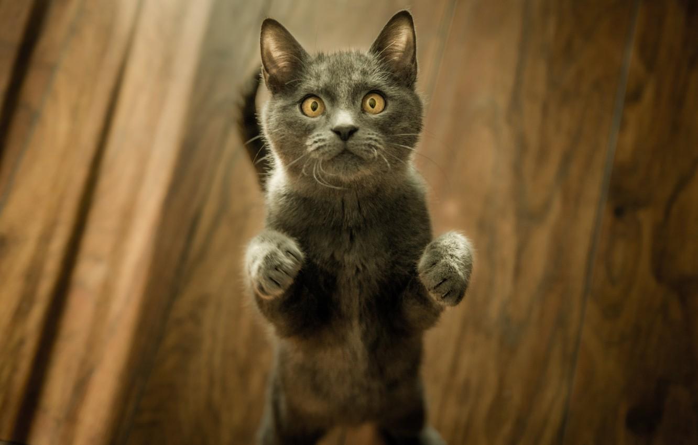 Фото обои лапки, мордочка, котёнок