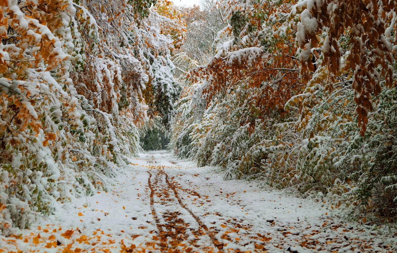 Фото обои тропинка, первый снег, зимние деревья