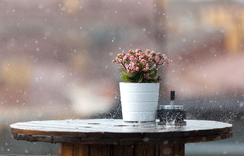 Фото обои мокро, макро, цветы, стол, фон, дождь, всплески, ливень, боке, кпли