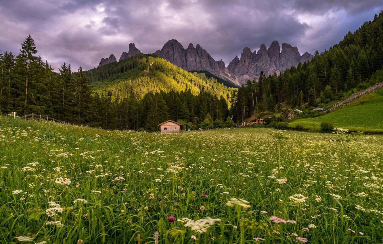 Фото обои лес, лето, трава, облака, пейзаж, цветы, горы, природа, холмы, склоны, ели, луг, домик, сказочно