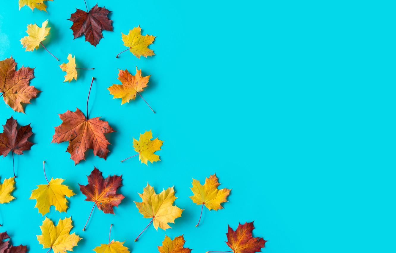 Фото обои листья, фон, клен