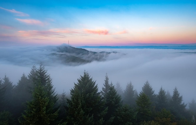 Фото обои небо, туман, утро